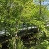 森林浴の画像