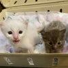 子猫の季節です!ご寄付のお願いの画像