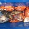 5月9日の釣果の画像