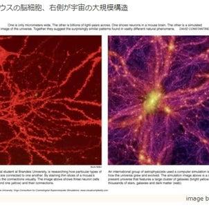 脳と宇宙の画像
