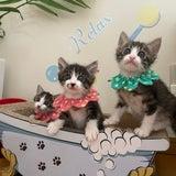 萌え散らかし3兄妹子猫がやってきたの記事画像
