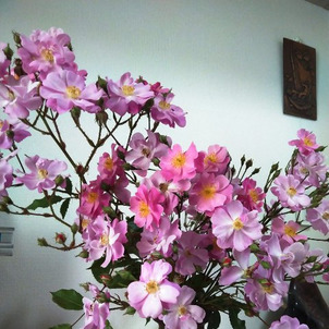 てんこ盛りのバラの画像