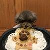 トイプードル『ゆめちゃん』のBirthdayケーキの画像