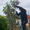 植木の剪定❗の画像