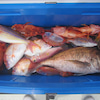 5月11日の釣果の画像