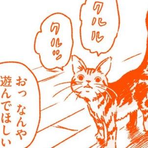 『つまねこ』第15話の画像
