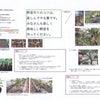 清田緑小学校の2年生のミニトマト作りの画像