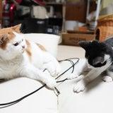 猫プロレスの記事画像