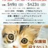5月23日(日)参加ねこちゃんのご紹介 ニノくんの画像