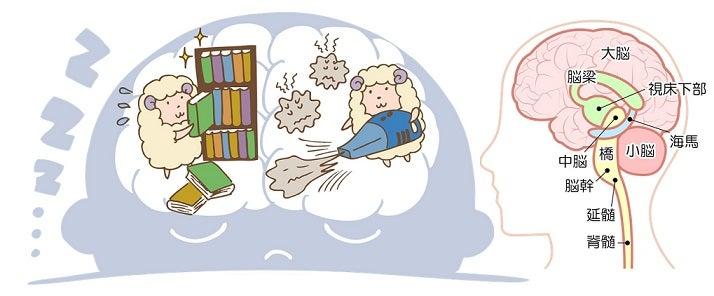 記憶の整理・レム睡眠