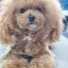 愛犬の日の画像