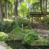 鎌倉の緑が美しい癒しのお寺☆ヒーリングスポットの画像