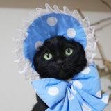 """おはようゴエモン。""""にゃらまち猫祭りのお知らせ""""の記事画像"""