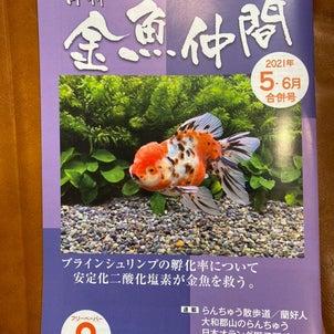 【北山店】金魚仲間の画像