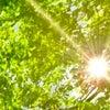 紫外線対策は大丈夫⁉️の画像