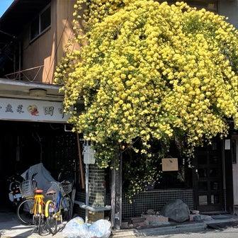 京都元田中の中華激戦区で人気急上昇中『イーパンツァイ田中』