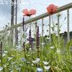 構想1年やっと完成!宿根ボーダー花壇オリエンタルポピーのある景色