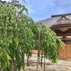 今後のお寺ヨガ開催日の画像