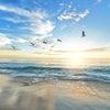 「あなたはもっと高く飛べる」 「鳥は飛ばねばならぬ」の画像