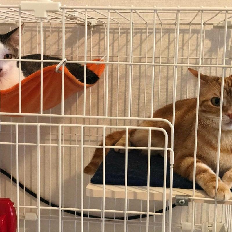 先住 猫 新入り 猫