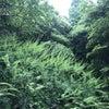 屋久島日和でした? | 渥美半島☆自然感察ガイドの画像
