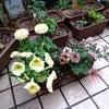 植物とコロンの画像