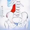 腰方形筋トリガーポイント 3 慢性化の要因の画像