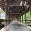 花の合間の長谷寺へ♪の画像