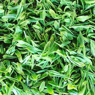 緑茶が免疫に良いとされる理由の一つの画像