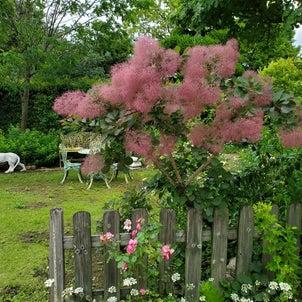 四季の庭 5月の画像