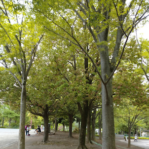 久しぶりの公園!の画像