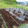 野菜の苗を植えました。の画像