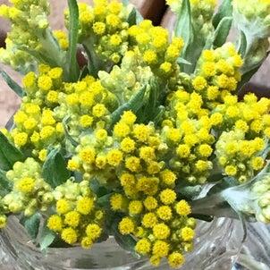 小さな切り花の画像