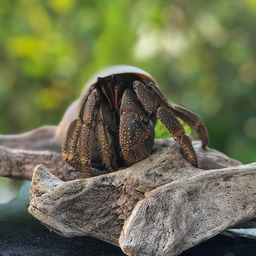 画像 甲殻類、イソギンチャクの入荷情報!2021年7月29日(木) の記事より