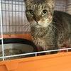 ちゅらにゃん保護猫治療室より猫紹介とご寄付のお願いの画像