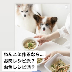 わんこのごはんレシピ、お肉派?お魚派?の画像