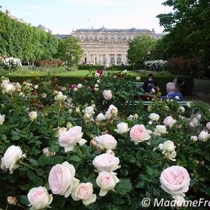 バラ咲き誇る パレ・ロワイヤル庭園の画像