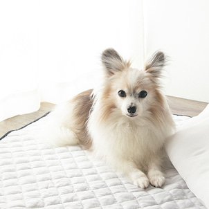 CanDoで発見☆犬にオススメ!冷感クッションマットの画像