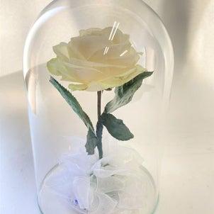 想い出の1本の白いバラの画像