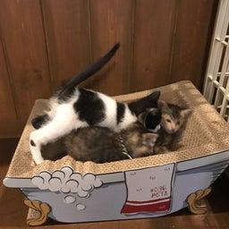 画像 子猫祭り 6月編 の記事より 8つ目