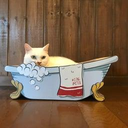 画像 子猫祭り 6月編 の記事より 9つ目