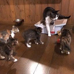 画像 子猫祭り 6月編 の記事より 25つ目