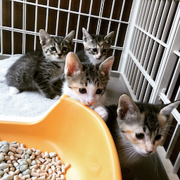 画像 子猫祭り 6月編 の記事より 3つ目