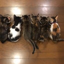 画像 子猫祭り 6月編 の記事より 18つ目