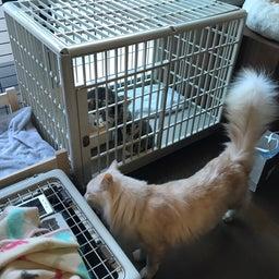 画像 子猫祭り 6月編 の記事より 4つ目