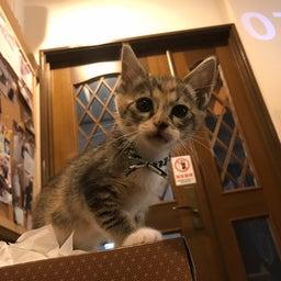 画像 子猫祭り 6月編 の記事より 21つ目