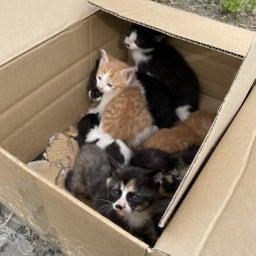 画像 子猫祭り 6月編 の記事より 12つ目