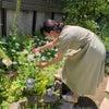 タッジーマッジー(ハーブの花束)の画像