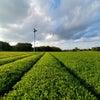 「故郷つくばの茶畑から日本を學ぶ」★男の茶道★沼尻宗真の画像