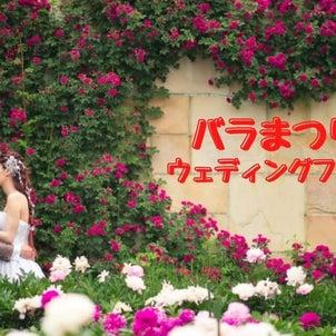長野県中野市 バラまつり開催中!ウェディングフォトの予約受付中の画像